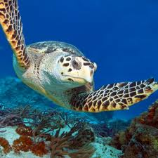 Turtles encounter